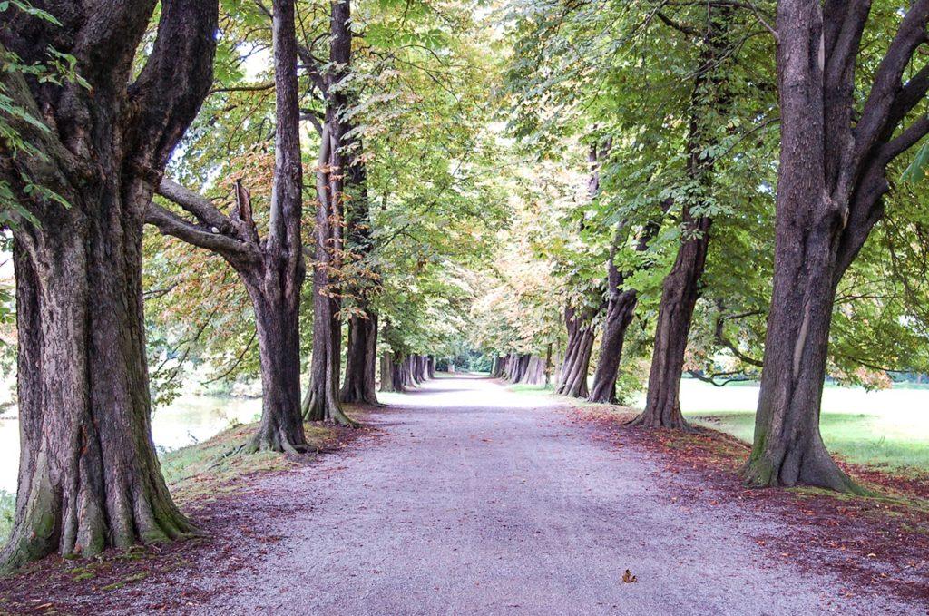 Pottleben - Allee im Schlosspark Herten